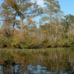 Reflections along Nassawango Creek from the Pocomoke River Canoe Company