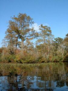 Reflections along the Nassawango Creek from the Pocomoke River Canoe Company